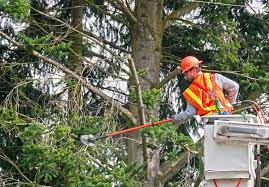 Proof: how the environmentalists are AGAINST trimming trees near power lines